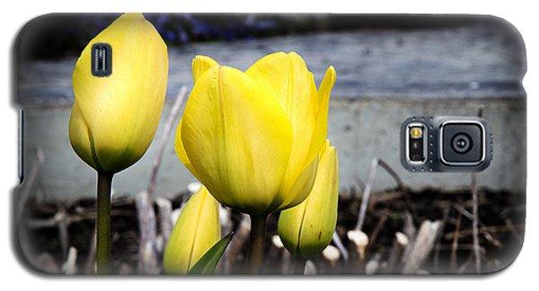 Yellow Tulips Galaxy S5 Case