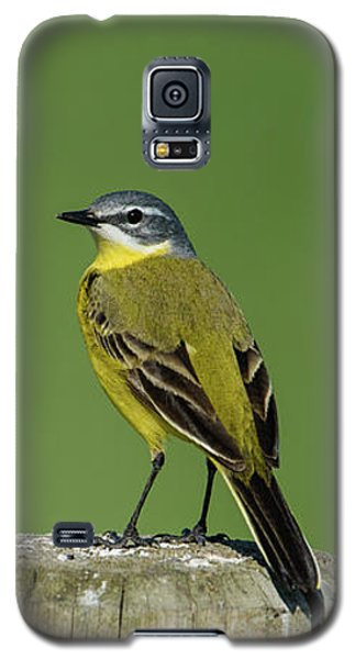 Yellow Wagtail Perching On The Roundpole Galaxy S5 Case