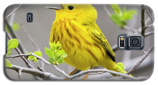 Yellow Warbler  Galaxy S5 Case by Ricky L Jones