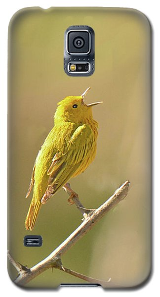 Yellow Warbler Song Galaxy S5 Case by Alan Lenk