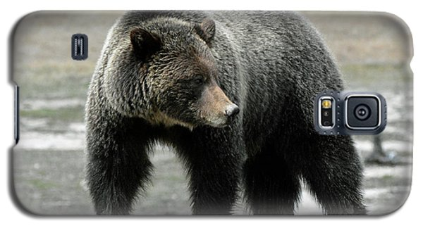 Galaxy S5 Case featuring the photograph Yellowstone Grizzly A Pondering by Bruce Gourley