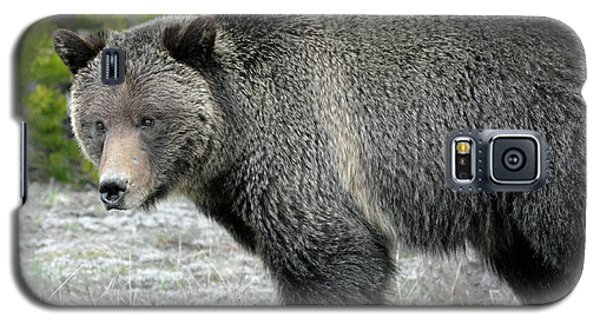 Galaxy S5 Case featuring the photograph Yellowstone Grizzly On The Hunt by Bruce Gourley