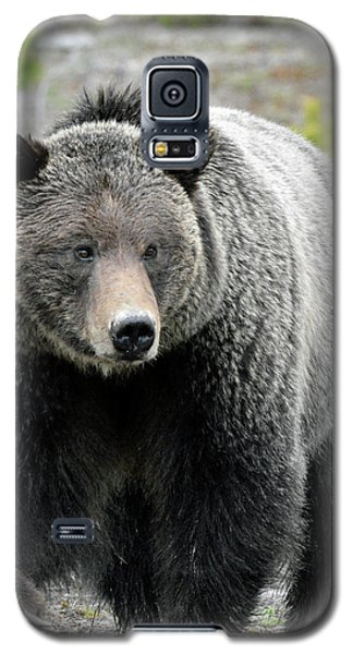 Galaxy S5 Case featuring the photograph Yellowstone Grizzly With Claws by Bruce Gourley