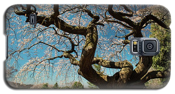 Galaxy S5 Case featuring the photograph Yoshino Cherry by Dana Sohr