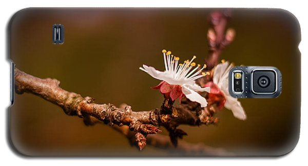 You Make Me Blossom Galaxy S5 Case by Tim Nichols