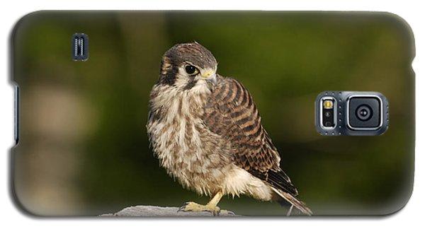 Young American Kestrel Galaxy S5 Case