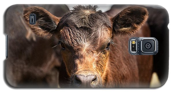 Young Angus Galaxy S5 Case