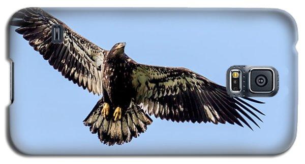 Young Bald Eagle Flight Galaxy S5 Case