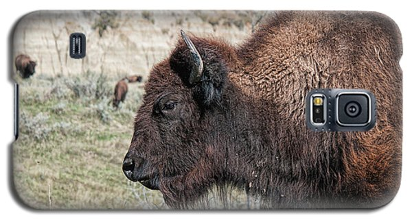 Young Bison Galaxy S5 Case