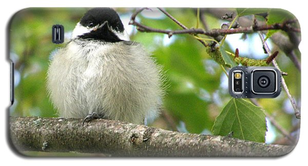 Galaxy S5 Case featuring the photograph Young Black-capped Chickadee by Angie Rea