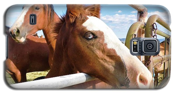 Young Blue Eyed Horse Galaxy S5 Case