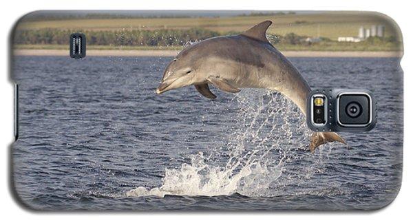 Young Bottlenose Dolphin - Scotland #13 Galaxy S5 Case