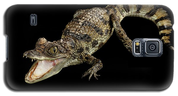 Young Cayman Crocodile, Reptile With Opened Mouth And Waved Tail Isolated On Black Background In Top Galaxy S5 Case by Sergey Taran
