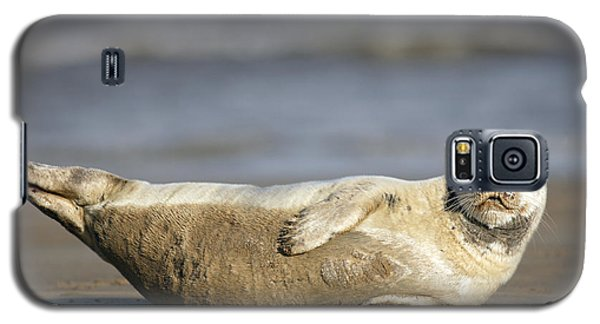 Young Common Seal Sleeping On The Beach Galaxy S5 Case