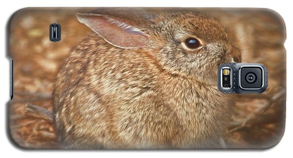 Young Cottontail In The Morning Galaxy S5 Case