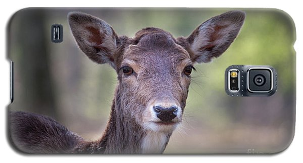 Young Deer Galaxy S5 Case