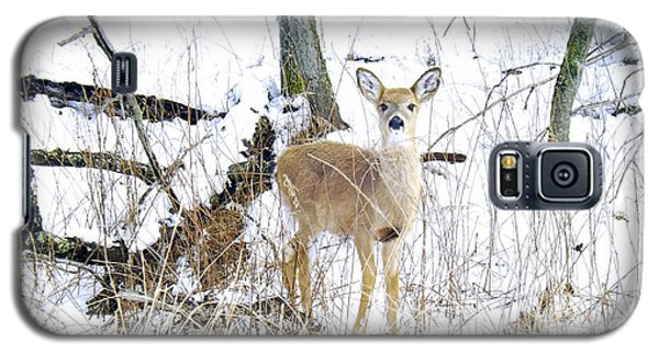 Young Doe And Spring Snow Galaxy S5 Case