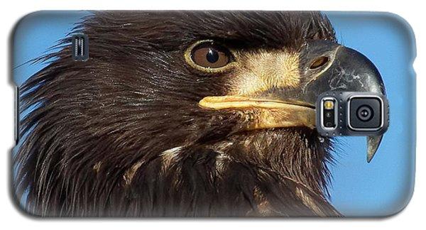 Young Eagle Head Galaxy S5 Case by Sheldon Bilsker