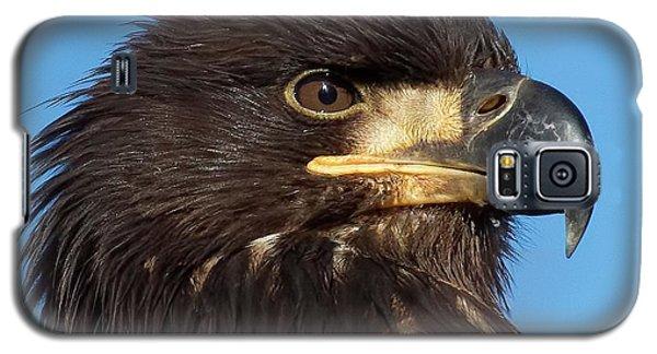 Young Eagle Head Galaxy S5 Case