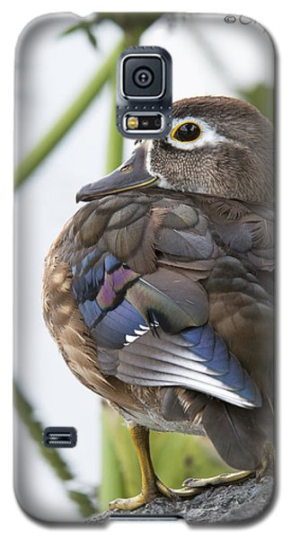 Young Female Wood Duck Galaxy S5 Case