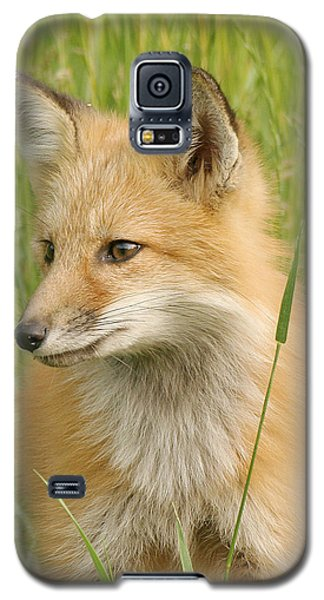 Galaxy S5 Case featuring the photograph Young Fox by Doris Potter