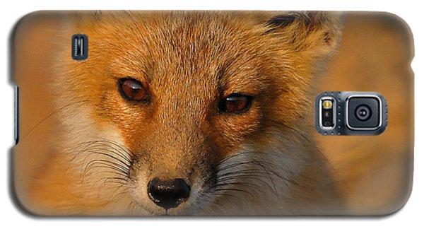 Young Fox Galaxy S5 Case