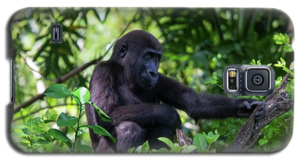 Young Gorilla Galaxy S5 Case