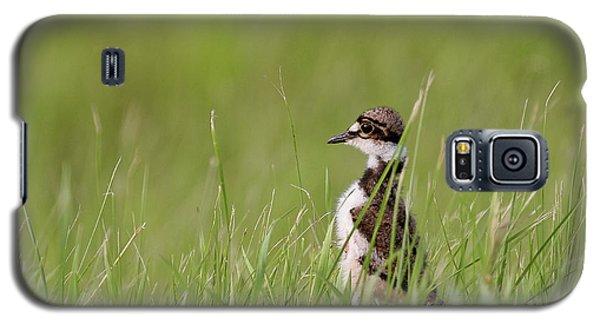 Killdeer Galaxy S5 Case - Young Killdeer In Grass by Mark Duffy