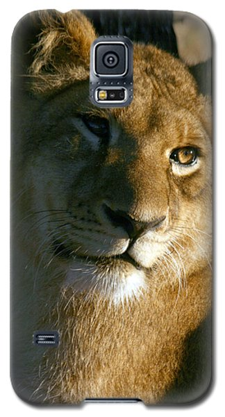 Young Lion Galaxy S5 Case