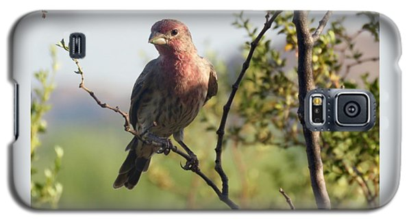 Young Male House Finch Galaxy S5 Case