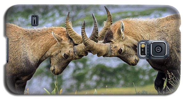 Young Male Wild Alpine, Capra Ibex, Or Steinbock Galaxy S5 Case by Elenarts - Elena Duvernay photo