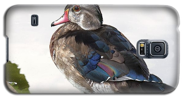 Young Male Wood Duck Galaxy S5 Case
