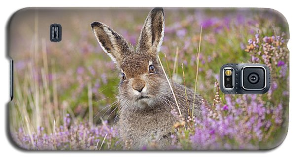 Young Mountain Hare In Purple Heather Galaxy S5 Case