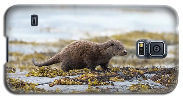 Young Otter Galaxy S5 Case