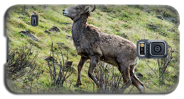 Galaxy S5 Case featuring the photograph Young Ram Climbing by Mike Dawson