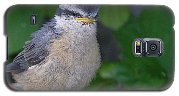 Galaxy S5 Case featuring the photograph Young Red-breasted Nuthatch No. 1 by Angie Rea
