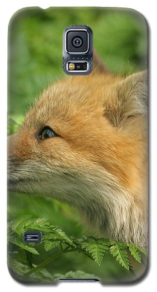 Galaxy S5 Case featuring the photograph Young Red Fox In Profile by Doris Potter