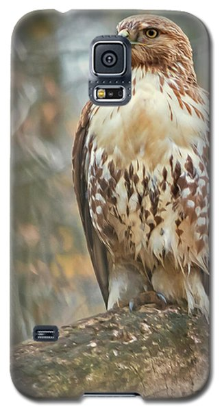Young Red Tailed Hawk  Galaxy S5 Case