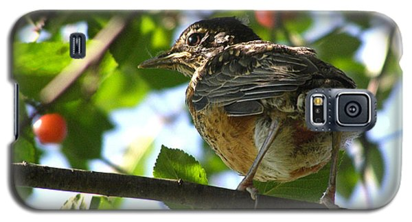 Galaxy S5 Case featuring the photograph Young Robin by Angie Rea