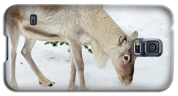 Galaxy S5 Case featuring the photograph Young Rudolf by Delphimages Photo Creations
