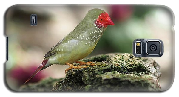 Young Star Finch Galaxy S5 Case