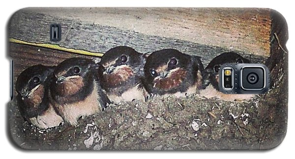 Young Swallows, Lancashire, England, Uk Galaxy S5 Case