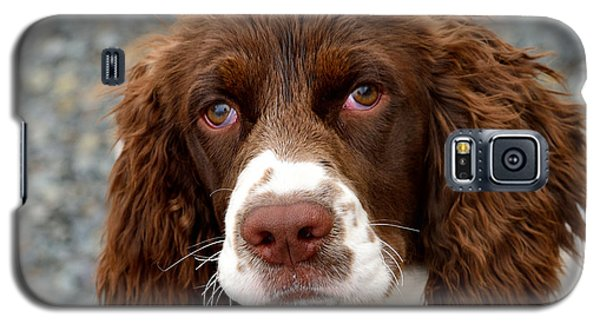 Young Water Spaniel Galaxy S5 Case