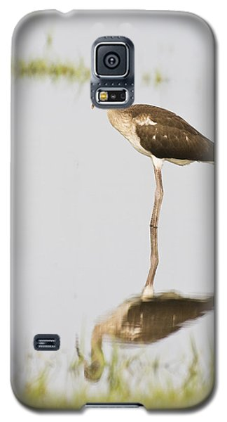 Young White Ibis Galaxy S5 Case