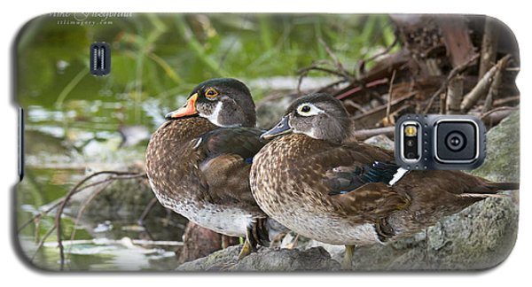 Young Wood Duck Pair Galaxy S5 Case