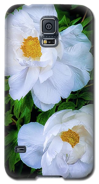 Galaxy S5 Case featuring the photograph Yu Ban Bai Chinese Tree Peonies by Julie Palencia