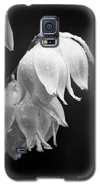 Yucca After The Rain Galaxy S5 Case