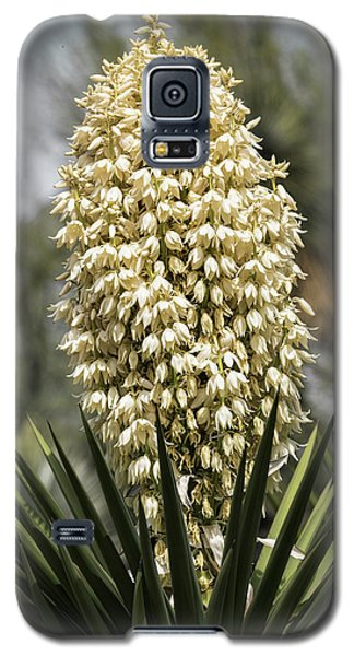 Galaxy S5 Case featuring the photograph Yucca Flowers In Bloom  by Saija Lehtonen