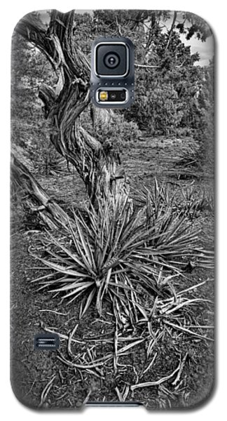 Yucca In Juniper Forest Galaxy S5 Case