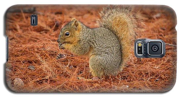 Yum Yum Nuts Wildlife Photography By Kaylyn Franks     Galaxy S5 Case